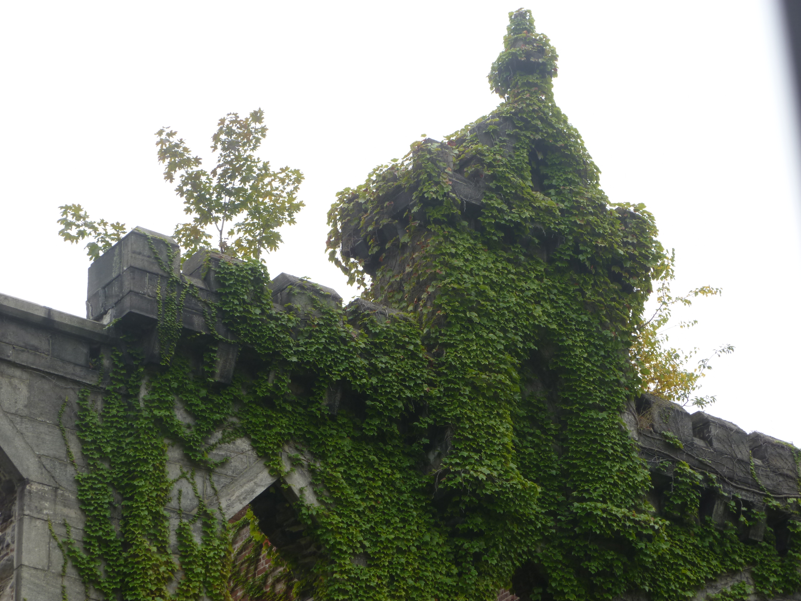 Vines cover the ruins of the old Smallpox Hospital on Roosevelt Island, New York.